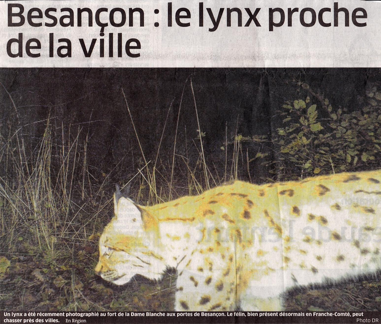 Lynx 8 dec 2013